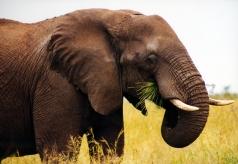 elephant-1258297-639x442