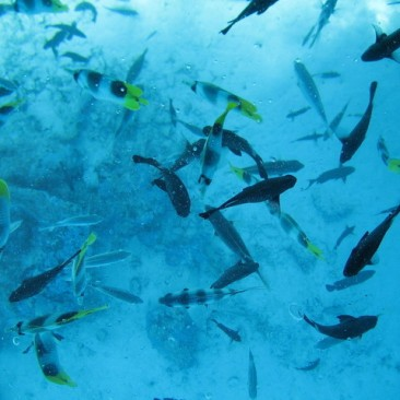 school-of-fish-in-bora-bora-1396386-640x480
